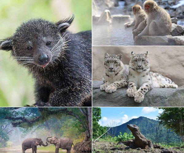 Animais típicos da Ásia