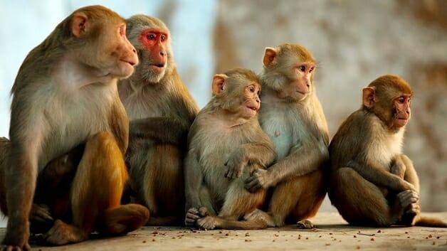 China confirma primeira morte humana por vírus raro de macaco